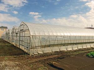 ハウス栽培農家