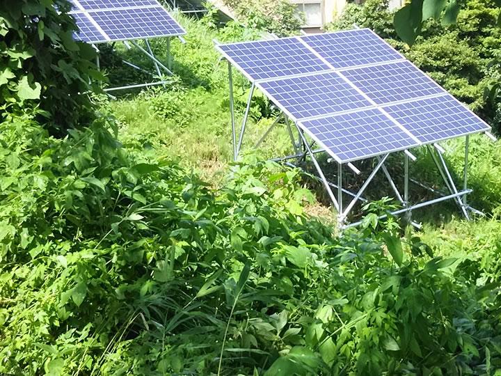 太陽光発電に最適な雑草対策は?あなたに合った対策を費用&特徴で比較